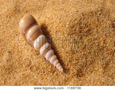 Long Shell