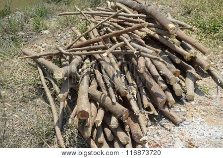 deforested cut tree wood