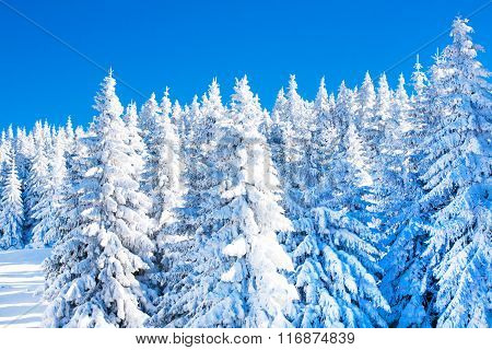 Vibrant winter vacation background with pine trees covered by heavy snow