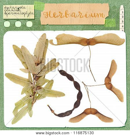 Set Of Wild Dry Pressed Seeds And Leaves