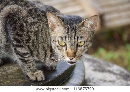 tabby cat on cement floor