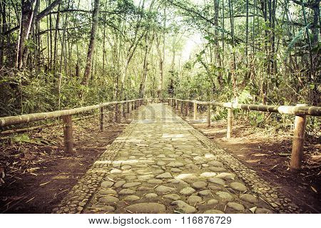 stone road in bamboo forest, san augustin park, colombia, latin america