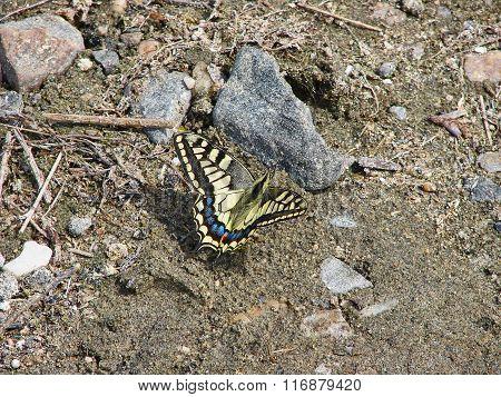 Beautiful yellow butterfly - photo 2