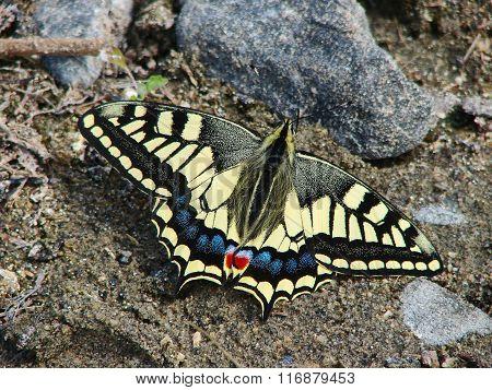 Beautiful yellow butterfly - photo 5