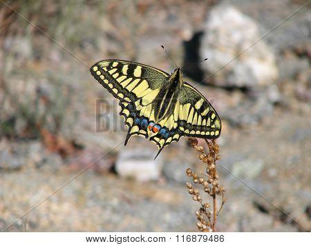 Beautiful yellow butterfly - photo 6