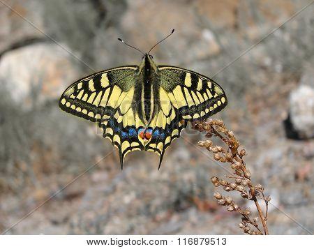 Beautiful yellow butterfly - photo 9