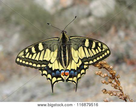 Beautiful yellow butterfly - photo 10