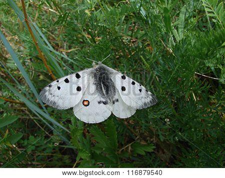 Beautiful white butterfly - photo 4