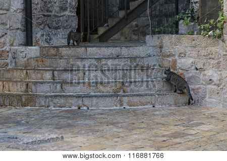 Cats playing on stairs in Nahalat Shiv'a, Jerusalem, Israel