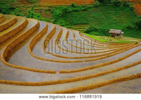 Rice fields on terrace in rainy season at Mu Cang Chai, Yen Bai, Vietnam.
