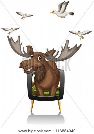 Moose and birds on television screen illustration