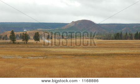 Open Field In Yellowstone