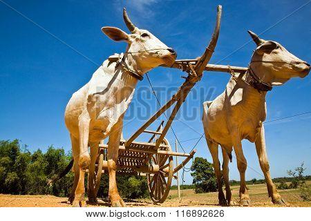 Labor bulls Cambodia!