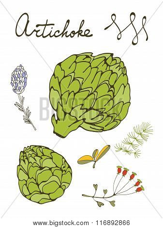 Colorful set of fresh hand drawn artichokes