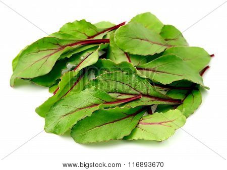 Sweet Beet Leafs(mangold) On White