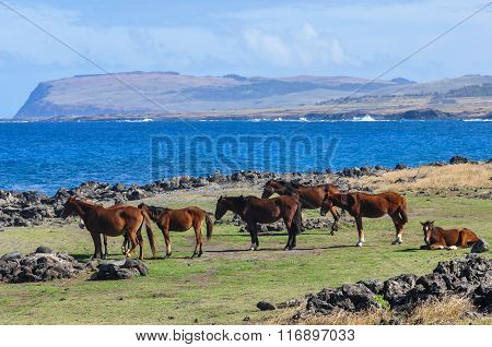Wild Horses On The Coast In Easter Island, Chile