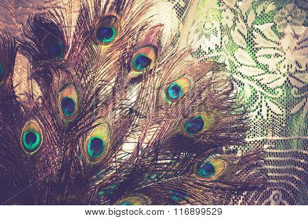 Peacock Feather Macro Retro