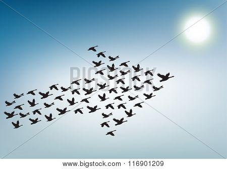 Flock Of Birds Flying In The Sky In An Arrow, Teamwork Concept