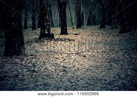 Trees In Autumn Park Retro