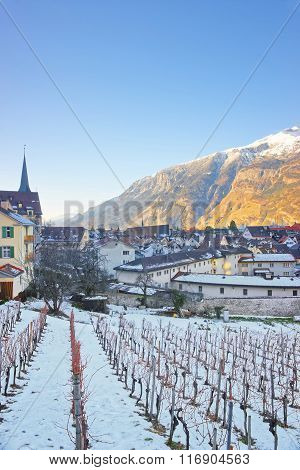 Vineyard And Mountains In Chur At Sunrise