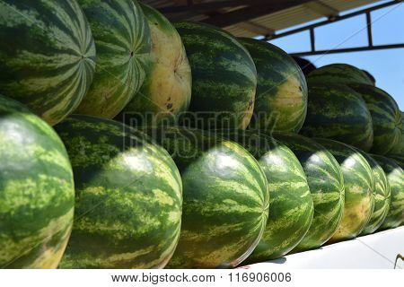 Water-melons On A Counter