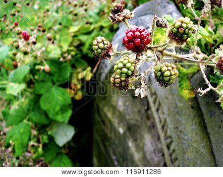 Berries On A Headstone
