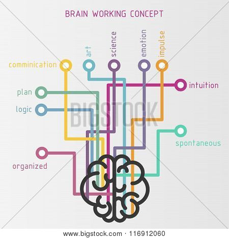 Brain working concept