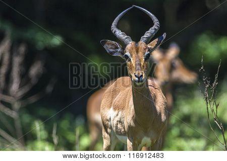Buck Wildlife Alert