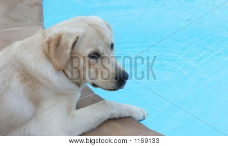 Dog Sitting By The Side Of A Pool