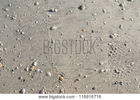 Texture white sand with seashells, background