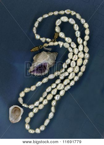 Perls And Shells