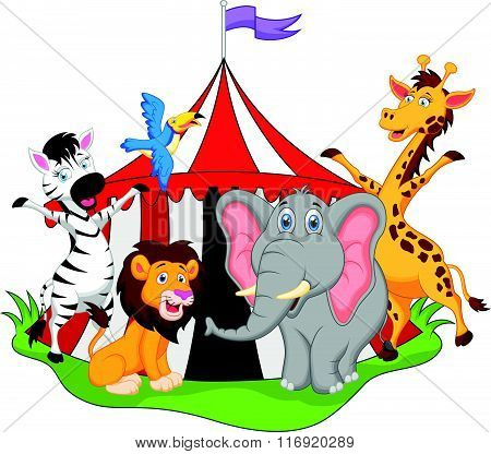 vector illustration of animals in circus cartoon