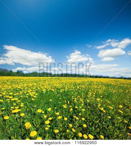 Yellow flowers hill under blue sky