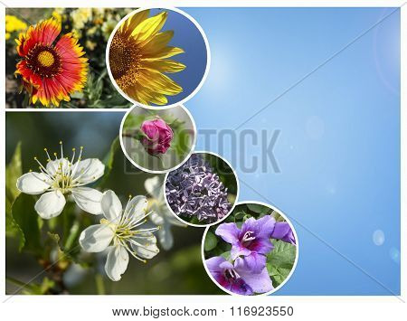 Collage Flowerses On Background Blue Sky