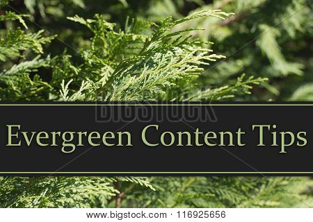 Evergreen Content Tips