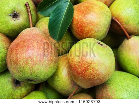 Fresh  Pears With Green Leaves