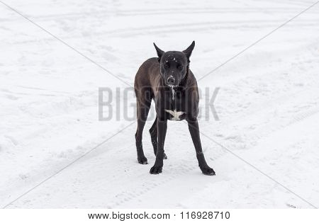 Stray dog is ready to defend own territory
