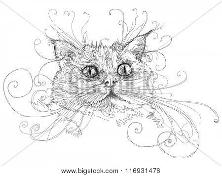 Portrait of attractive cat. Linear vector black and white illustration