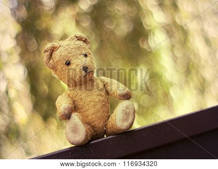 Cute Toy Bear