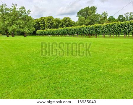 Summer Park With A Row Of Linden Trees