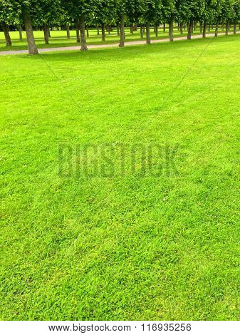 Green Lawn And Alley With Linden Trees