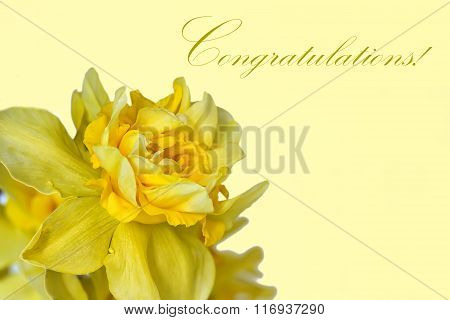 Greeting Card With Daffodils