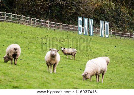 Say No sign with sheep