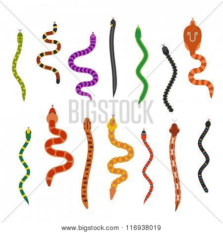Vector flat snakes collection isolted on shite background. Vector snakes flat style. Different snakes skin texture