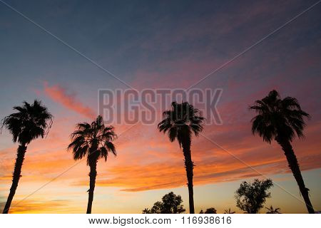 Palm Tree West Coast Tropical California Sunset