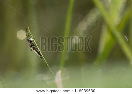 Mosquito warming-up on grass with soft background