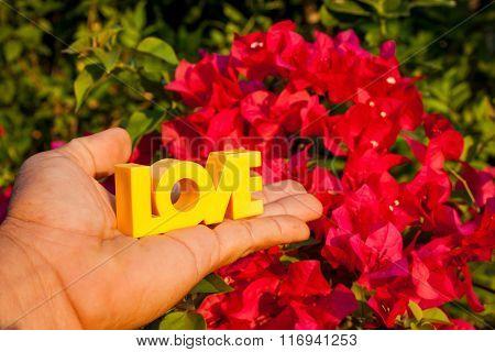 Flower Background Love Hand Color Valentine's Day