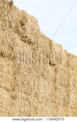 Straw Bales Vertical
