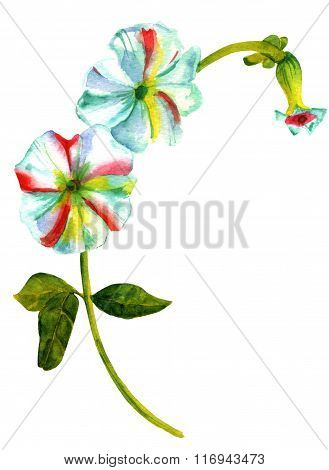 Watercolor Drawing Of White Hollyhock Flower On White Background