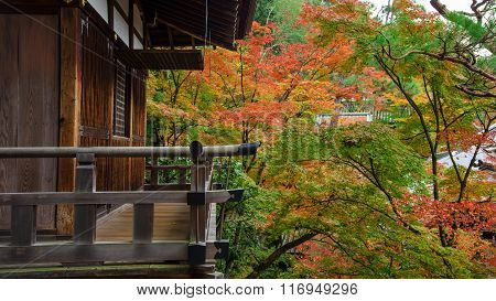 Wooden Building And Autumn Leaves At Eikando, Kyoto